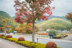 Autumn view with colorful in village near Lake Kawaguchiko, Japan. royalty free stock images