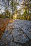 Autumn View en un parque Fotografía de archivo libre de regalías