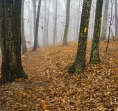 Autumn View of a Foggy Hiking Trail stock photo