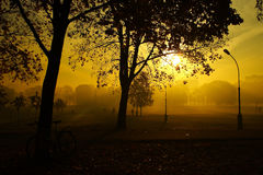 Autumn view foggy park alley with bare trees and fallen leaves. Royalty Free Stock Photography