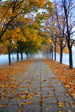 Autumn view foggy park alley with bare trees and fallen leaves. Royalty Free Stock Images