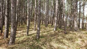 Forest Meadows. Autumn view of forest area.  meadows royalty free stock photos