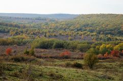 Autumn view forest stock photography