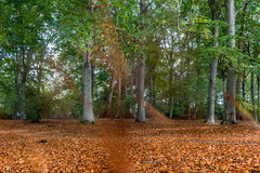 Autumn view of a forest. In Berlin, Germany Royalty Free Stock Image