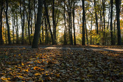 Autumn view of a forest at sunset stock image