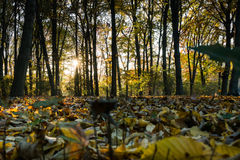Autumn view of a forest at sunset stock photo