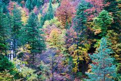 Autumn: a view of a full of colours autumn leaves in a beautiful forest royalty free stock photos