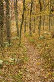 Autumn View of a Hiking Trail Royalty Free Stock Image