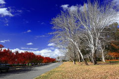 Autumn view of Lake Burley Griffin bank Stock Photo