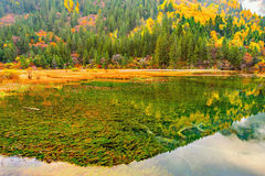 Autumn view of the lake with pure water. Royalty Free Stock Images