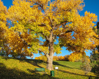 Autumn view. Autumn landscape with Oak tree, chair and grass field in Farmington, New Mexico Royalty Free Stock Image