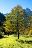 Maple trees at Ahornboden, Karwendel mountains, Tyrol, Austria royalty free stock images