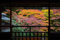 Autumn view of maple trees in vibrant fall color framed by a Japanese wood balcony. Beautiful red and yellow autumn maple trees in Kyoto, Japan neatly framed by royalty free stock photos
