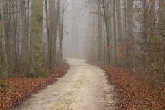 Autumn view of misty forest autumn nature. Autumn road in dense Royalty Free Stock Images