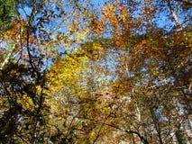 Autumn View nella quercia Ridge Greenway Immagini Stock