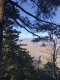 Pine on mountain peak Falaza. royalty free stock photography