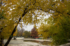 Autumn view in park Stock Photography