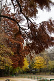Autumn view in park Royalty Free Stock Photos