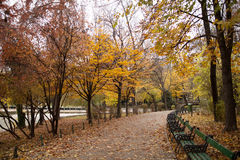 Autumn view in park Royalty Free Stock Images