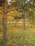 An autumn view in the park Royalty Free Stock Photo