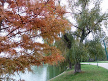 Autumn view in park Royalty Free Stock Photography