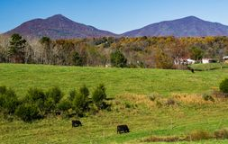 A Scenic view of the Peaks of Otter, Bedford County, Virginia, USA. Autumn view of the Peaks of Otter located in the Blue Ridge Mountains located in Bedford stock image