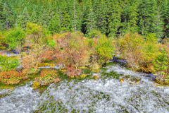 Autumn view of Pearl Shoals with pure water. Royalty Free Stock Photos