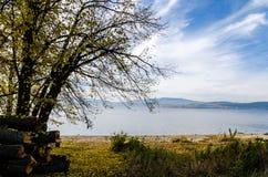 Autumn view on shore of Lipno Lake. View on shore of Lipno Lake with woods and trees in autumn in Czech Republic Royalty Free Stock Photography