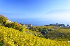 Autumn View stupéfiant de lac suisse avec le vignoble et les Alpes Photographie stock