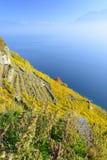 Autumn View stupéfiant de lac suisse avec le vignoble et les Alpes Photographie stock libre de droits