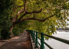 The Thames Path, in Fulham. Autumn view of the Thames Path, somewhere in Fulham, London, UK royalty free stock photography