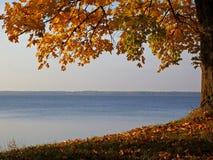 Autumn view to lake Rekyva. Autumn view to the lake Rekyva below branch of maple Royalty Free Stock Photo