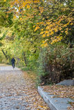 Autumn view of trail on the riverside royalty free stock photo