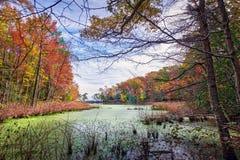 Autumn View through the trees of a Chesapeake Bay lake Stock Images