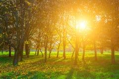Autumn View on Trees and Sun Stock Photos