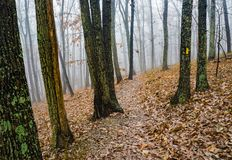 Autumn View van een Mistige Wandelingssleep - 2 stock foto's