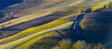 View of the Langa hills in autumn. Autumn view of the vineyards on the colorful hills of the Langhe royalty free stock photo
