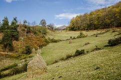 Autumn in village. Autumnal landscape of the idyllic hills in the village Holbav, Brasov County, Romania Royalty Free Stock Photo