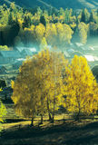 Autumn village Baihaba, xinjiang,china Stock Image