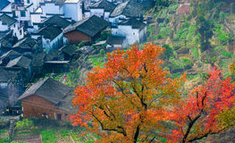 Autumn village Royalty Free Stock Photo