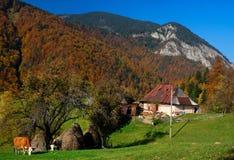Autumn village landscape in Romania stock photography