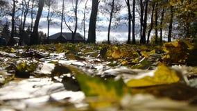 Autumn In The Village stock footage