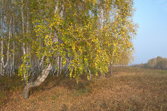Autumn in Village Royalty Free Stock Image