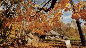 Autumn in the village. Straw at the barn. Yellow leaves in sunlight. Shooting in motion with electronic stabilization. Autumn in the village. Straw at the barn stock footage