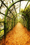 Autumn vine alley. Perspective view on the autumn vine alley Royalty Free Stock Photo