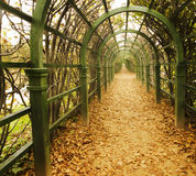 Autumn vine alley. Perspective view on the autumn vine alley Royalty Free Stock Image