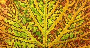 Autumn vine leaf Stock Photo