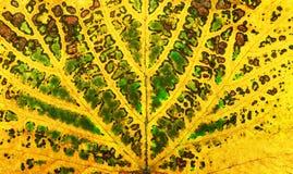 Autumn vine leaf texture Royalty Free Stock Photos