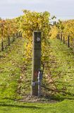 Autumn Vines 05. Grape vines in Hawke's Bay, New Zealand Stock Photography