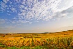 Free Autumn Vineyard Stock Image - 10432961